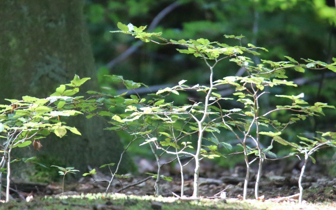 Coupe d'arbres le long des voiries : Ecolo demande à voir la feuille de route