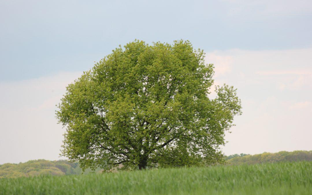Quand un arbre tombe, on l'entend ; quand la forêt pousse, pas un bruit*